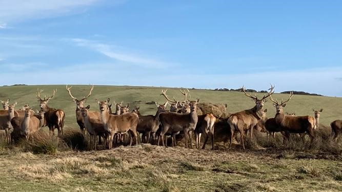 Photograph of High Knock & Maize Red Deer Farm, Portpatrick